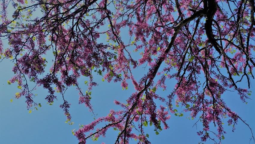 Un arbre, le ciel et des fleurs... la promenade idéale