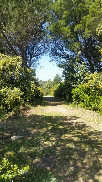 Chemin de randonnée au camp de césar à laudun