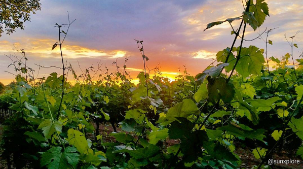 Le soleil se couche sur les vignes de Bagnols-sur-cèze