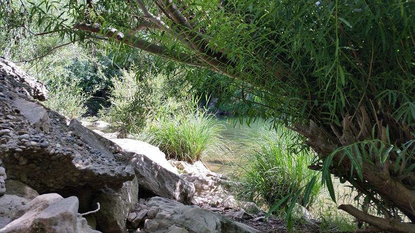Une baignade à Bagnols sur cèze