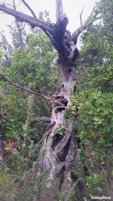 Un arbre insolite en Ardèche